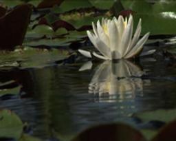 Protections naturelles ; La nature a tout inventé ; Se mettre au vert : Volume 3 / Alexandra Posada, Ashley Bruce, Steve Hobbs, réal. |